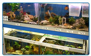 animalerie marseille oisellerie aquariophilie au perroquet bleu